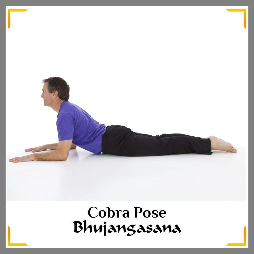 cobra pose to increase sperm count