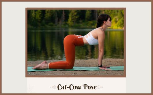 cat cow pose benefits